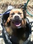 Honeydew the water dog!