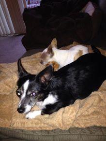 Bella & Zilla