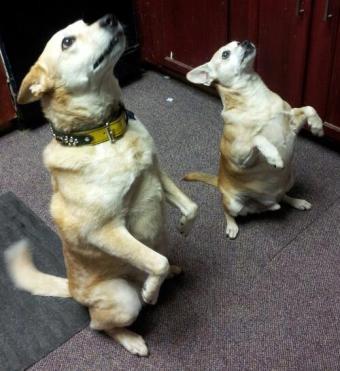 Levi & Tucker love SNACKS!!!
